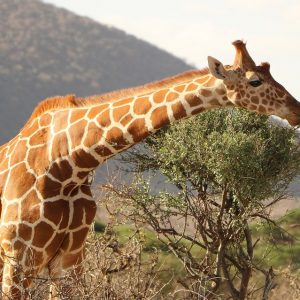 Safari Cape Town - South Africa